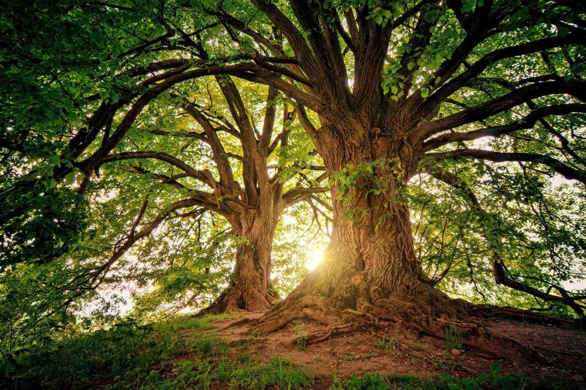 bark-branches-environment-1632790