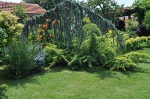 Райско място - ботаническа грдина