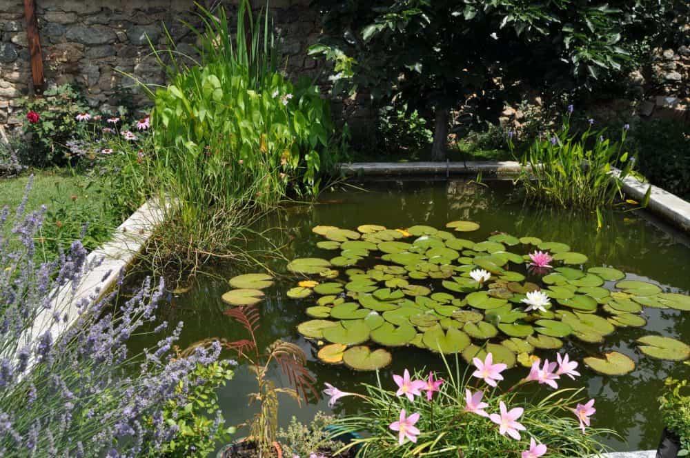 Райско място с интересен храст