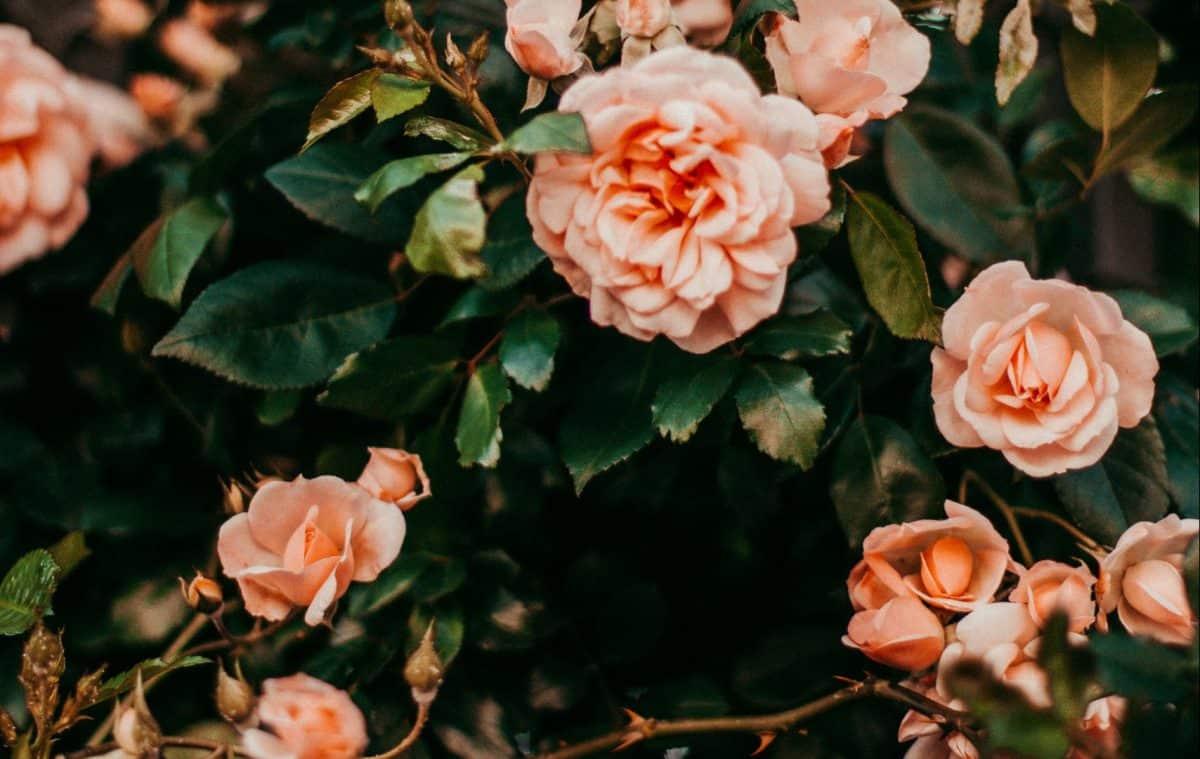 цветя вкъщи