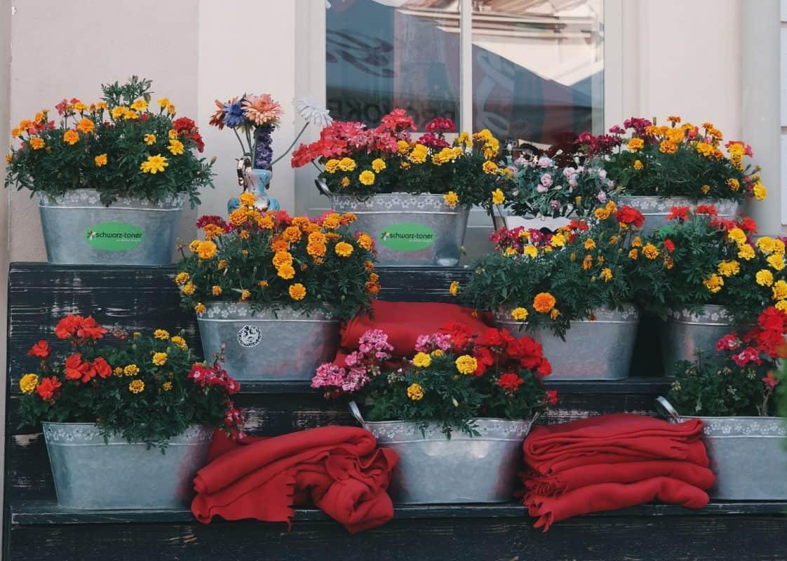 Цветя на тераса