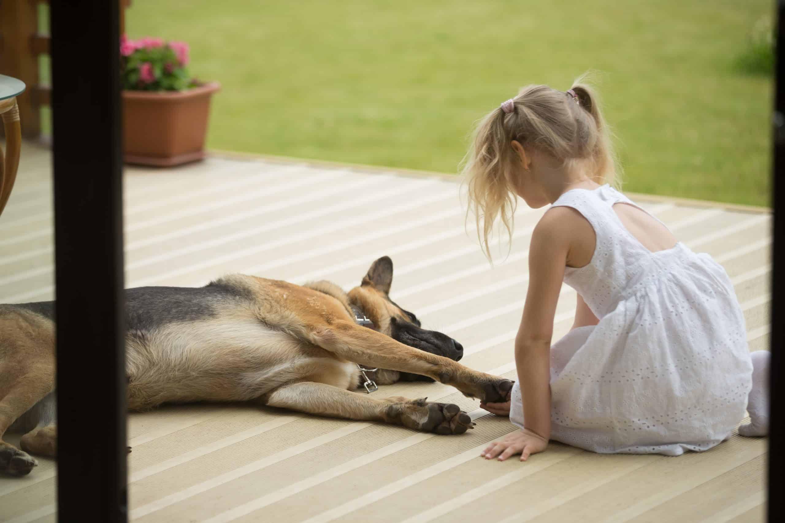 """Възпитанието на кучето ти не се изчерпва със """"Седни"""" и """"Дай лапа"""""""