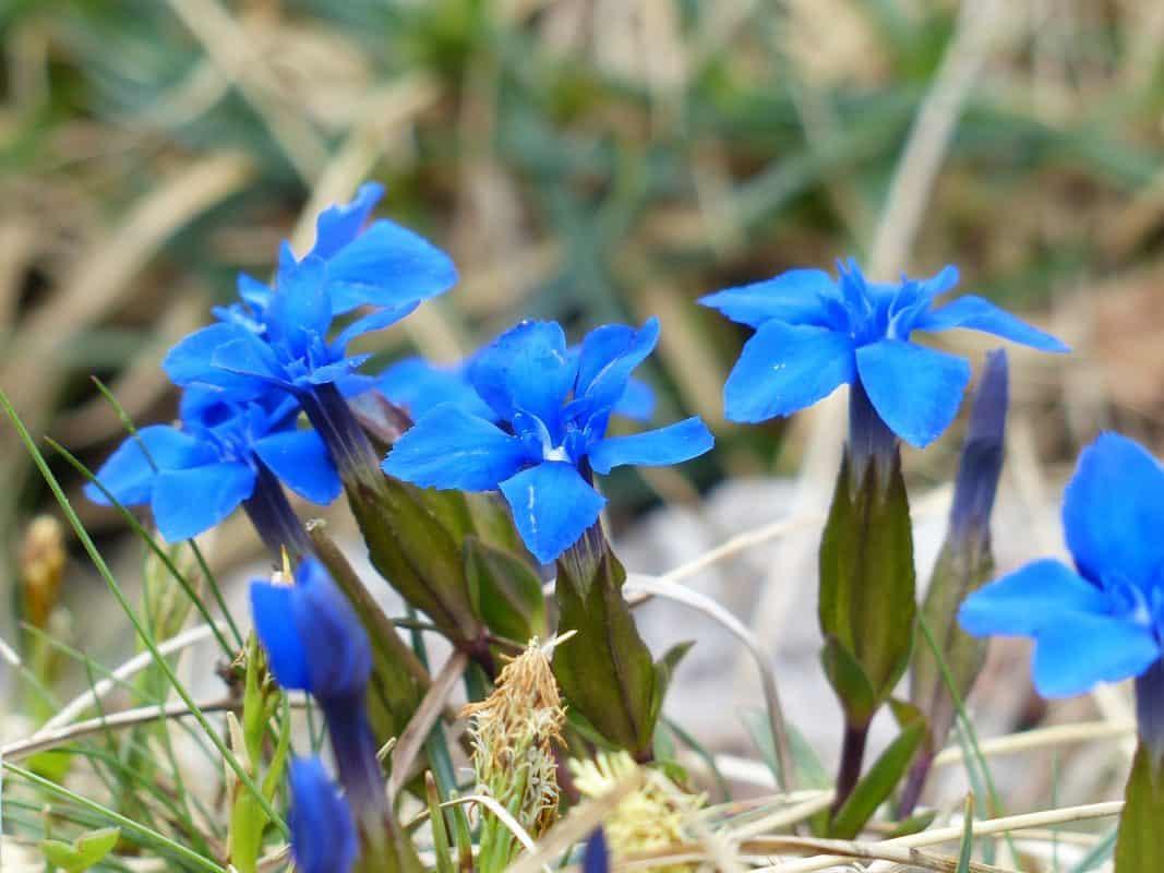 Синьото биле и Авгия, която лекуваше всичко